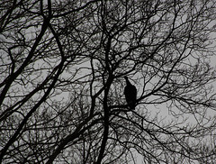 Nocturnal Visit | Bear Mountain State Park (maulik shahh) Tags: bird nature night blackandwhite newyork unitedstates bearmountain photography photographer images contrast peace solitude minimalistic