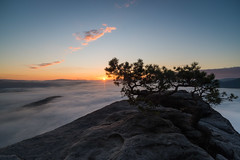 Sunrise at the end of the cliff (derliebewolf) Tags: cloud mountains lines clouds sunrise de deutschland haze pattern saxony sachsen flare bluehour flog sonnenaufgang goldenhour lilienstein sunstar sächsischeschweiz d600 jira saxonswitzerland oldpine 20mmf35ais porschdorf symetryinnature