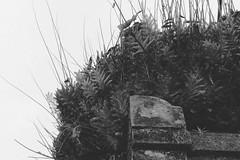 Dry (jstfd) Tags: bali plants indonesia asia dry ubud denpasar tabanan candikuning puraulundanubratan baliarchitecture shivaite purabratan