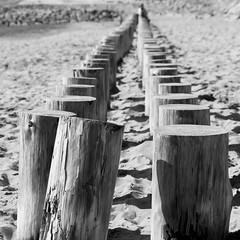 Raw sticks (Arthur Huet) Tags: wood bw france beach monochrome lines sticks sand sable noirmoutier plage bois vende 600d