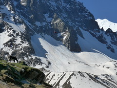 Grand_Parcours_alpinisme_Chamonix-Concours_2014_ (9)