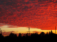 Sky at Sunset on October 2, 2015 in Fellbach, Germany (Batikart) Tags: autumn sunset red sky orange sun sunlight plant color colour art fall nature weather silhouette clouds canon germany landscape geotagged deutschland golden evening abend leaf twilight october europa europe sonnenuntergang natural herbst natur pflanze himmel tranquility formation growth electricity ursula powerpole landschaft sonne cloudscape sander g11 fellbach badenwürttemberg strommast 2015 swabian sonnenlicht 100faves 200faves beautyofnature wolkenformation batikart canonpowershotg11 300fave