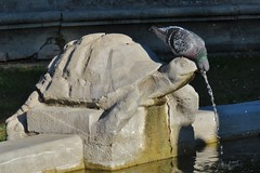 Another bird-turtle symbiosis! (Elisa1880) Tags: italy sculpture rome roma bird fountain animal italia schildpad turtle pigeon villa italie vogel lazio borghese duif fontein