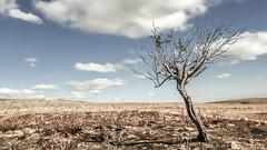 Defier (drstar.) Tags: tree fall clouds nikon flickr lonely defier d610 flickrturkey