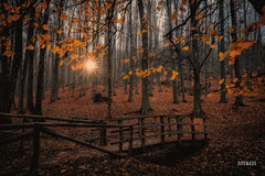 Entrada a El Tiemblo (Marta & Eduardo) Tags: bridge autumn trees luz forest puente hojas spain explore bosque d750 otoo rayos vila otoal tiemblo diamondclassphotographer flickrdiamond
