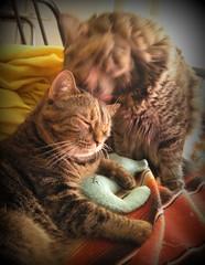Cat Bath (elycefeliz) Tags: mani lucky catbath