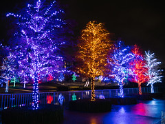 Vitruvian Lights 2015-14 (MikeyBNguyen) Tags: us texas unitedstates christmastree christmaslights christmastrees addison vitruvianpark vitruvianlights