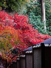 平林寺 Heirinji Temple (かがみ~) Tags: japan temple panasonic 日本 saitama 寺 埼玉 gx8 niiza 新座 14140ii
