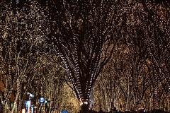 DSC03210.jpg (randy@katzenpost.de) Tags: winter japan sendai miyagiken sendaishi japanurlaub20152016