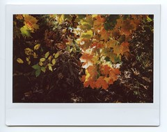 Autumn Colors (Past Our Means) Tags: autumn fall instax instant instaxwide wide 210 fujifilm fujifilminstax fuji film filmisnotdead istillshootfilm analog analogue colors orange green yellow hiking sleeping giant leaf