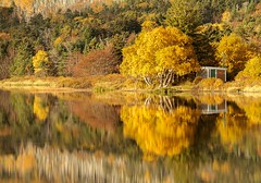 Flat Calm (Karen_Chappell) Tags: longpond yellow orange trees reflection fall autumn stjohns newfoundland nfld canada avalonpeninsula pond water pippypark green atlanticcanada october shed calm scenery scenic landscape