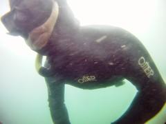 GOPR5970 (ambrogi_taubate) Tags: naturezaselvagem marinha mergulhando ubatuba sp brasil naturezamarinha fantstica apneia 10m setembro primavera 2016