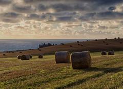 Another morning (burnsmeisterj) Tags: olympus omd em1 sunrise castle dunnottarcastle hay field sea stonehaven
