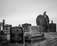 Stone The Crows - Explored (SKAC32) Tags: cemetary crow tombstones pantyscallog merthyrtydfil gravestones blackwhite monochrome bw wales