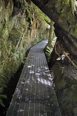 IMG_5535-Philosoher Falls Waratah-track over water race-A (geoffgleave) Tags: philosopherfallstrack waratah forest