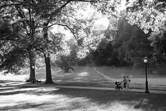 XT1-10-11-15-445-3 (a.cadore) Tags: fujifilmxt1 fujifilm xt1 zeissbiogon28mmf28 biogont2828 zeiss carlzeiss newyorkcity nyc uptown uws centralpark landscape candid blackandwhite bw