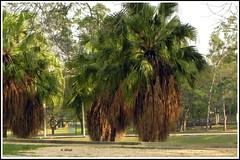 Vegetao tropical (o.dirce) Tags: vegetao vegetaotropical natureza quintadaboavista riodejaneiro odirce