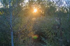 Oro (Artal B.) Tags: árboles naturaleza sol atardecer verde oro otoño vegetación