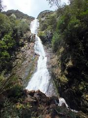 Montezuma Falls (LeelooDallas) Tags: australia tasmania cradle mountain landscape dana iwachow fuji finepix hs20 exr montezuma falls waterfall rosebery tree forest water