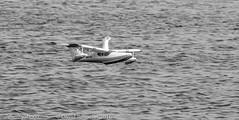 383A0632.jpg (ilzho) Tags: remotecontrol floatfly airplanes