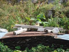 Marmot_at_the_Chalets_de_Sales_3 (Abbey_L) Tags: alps animal chaletsdesales day3sales france frenchalps mammal marmot outbreakadventure samoens tjpio