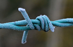 frosty barb (conall..) Tags: frost ice barb barbed wire