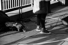 Barred Friendship (Ruby Nixon) Tags: london city town thames golden hour black white architecture urban landscape building buildings water reflection eye street photography ldn streetphotography rubynixon ruby nixon river birds view vintage dog mans best friend barred friendship shadow light sunset performer owner girl