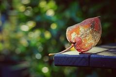 i can see through you (Bilderwense) Tags: lneburgerheide rural lndlich niedersachsen nature natur nikon nikkor 50mm f18 d5000 germany deutschland norddeutschland europa europe nikond5000 countryside landschaft wald outdoor pflanze colors colours colorful colourful serene red rot fall autumn herbst dof depth depthoffield tiefenunschrfe tiefenschrfe bokehrama bokeh smooth soft bokehlicious makro macro macrodreams macromonday schrfentiefe verschwommen macromondays