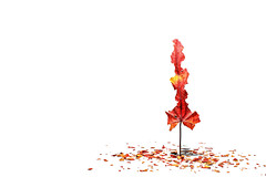 autumn (brescia, italy) (bloodybee) Tags: 365project autumn fall season leaves tree humor fun stilllife white red minimal minimalism