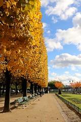 Couleurs d'automne  Paris (escaledith) Tags: feuilles automne square arbres squareparisien jaune ciel nuages paris quartiernotredame yellow colour autumm otonal follaje amarillo
