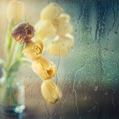 Behind the window (RoCafe) Tags: pentacon50mmf18 stilllife flowers tulips yellow rain window nikond600
