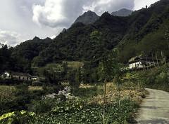 Mountain Farmland (cowyeow) Tags: shennongjiaforestrydistrict composition asia asian china chinese farm farming harvest shennongjia road landscape mountains hubei