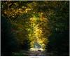 Encounter on an autumn morning (nandOOnline) Tags: natuur nikon nevel herfst landschap mist zwijn varken everzwijn ochtend stippelberg zon bomen bos d500 rips nbrabant nederland