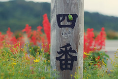 2 (  / Yorozuna) Tags:        amphibian    green color    no4  4 four    kanji character type font  niigata  nagaoka japan treefrog japanesetreefrog frog pentaxautotakumar55mmf18