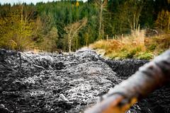 post industrial (3) (grahamrobb888) Tags: nikon nikond800 nikkor50mmf18 birnamwood perthshire scotland autumn frost forest forestry footpath track bokeh