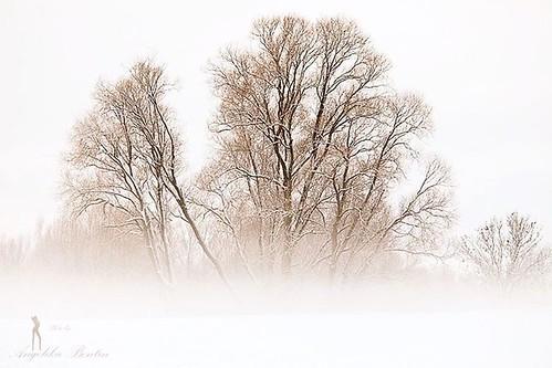 #kalt #schnee #snow #baum
