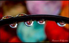 Six (Francesca D'Agostino) Tags: gocce drops colori colors riflessi reflections