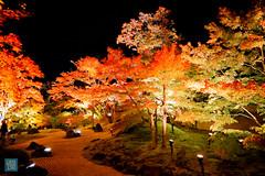 Tohoku 2016 - 506 (西文 Simon) Tags: 日本東北 miyagigun miyagiken 日本