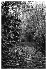 Pathway (Ebby62) Tags: blackwhite humber