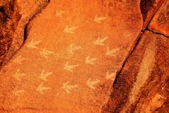 Murujuga National Park, Western Australia. (Cale McMillen) Tags: travel slr art rock canon landscape photography eos nationalpark ngc australia wa gorge aboriginal petroglyph karratha westernaustralia carvings indigenous karijini millstream pilbara dampier 650d burrup murujuga