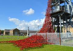 River of poppies (Tony Worrall) Tags: county uk red england sculpture flower color art museum newcastle war stream remember tour open arty place country north group visit exhibit location pit exhibition poppies area works colourful northern update northeast celebrate attraction coalmine mone colliery rememberence woodhornmuseum weepingwindow welovethenorth ©2015tonyworrall weepingwindowatwoodhorn