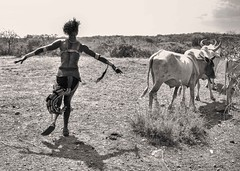 Ceremony, Hamer Tribe, Ethiopia (Rod Waddington) Tags: africa woman female dance jumping cattle african ceremony culture trumpet valle dancer bull valley afrika omovalley horn ethiopia ethnic cultural ethnicity afrique ethiopian omo etiopia ethiopie turmi