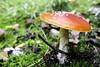 IMG_3003-Modifier (mycenium) Tags: mushroom automne canon belgium belgique region foret brabant champignon 6d wallon wallonie 2015 grez grezdoiceau wallone doiceau