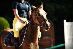 Portrait (PhotOw'graphie) Tags: portrait horse sport cheval yeux tte
