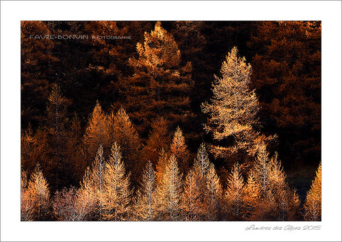arbres-06