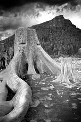 Rattlesnake Lake (Owen in Seattle) Tags: seattle washington rattlesnake