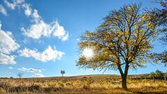 keep the sun (drstar.) Tags: sun sunlight tree yellow flickr fallcolours d610 flickrturkey