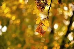 The autumn has arrived (explored) (Matja Skrinar) Tags: 850mmf18 100v10f nikonfxshowcase nikon