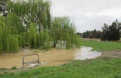 Sweeping past the willows (troggonk) Tags: ginnderra creek act sept 2016 ngunnawal gungahlin water erosion maintenance