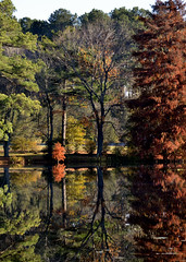 Red Tree Reflection by Linda Walls (AccessDNR) Tags: 2016 photocontest fall autumn scenery sceniclandscape galestown foliage